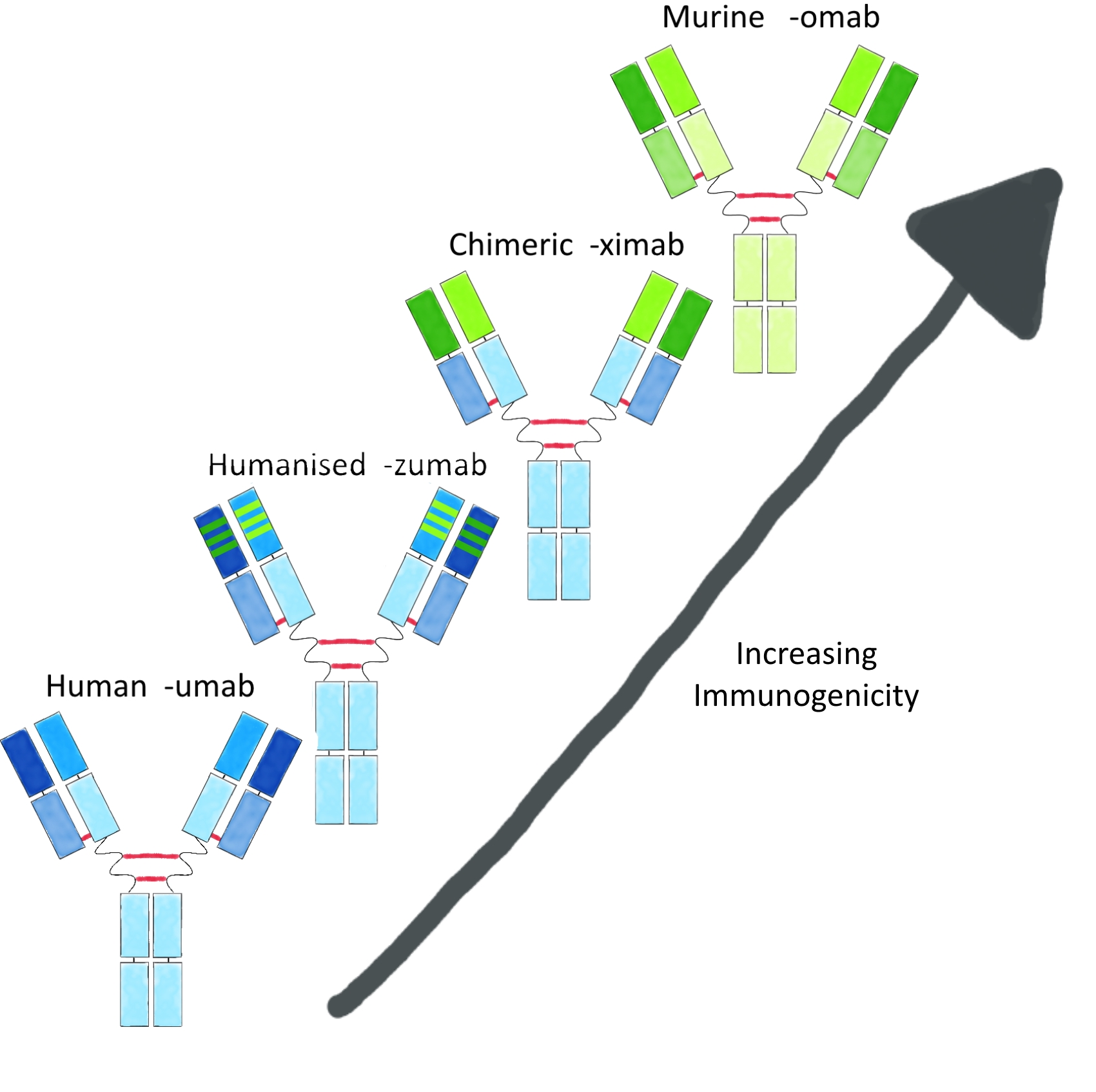 Murin to Human Mab Comparisons Annotated 2